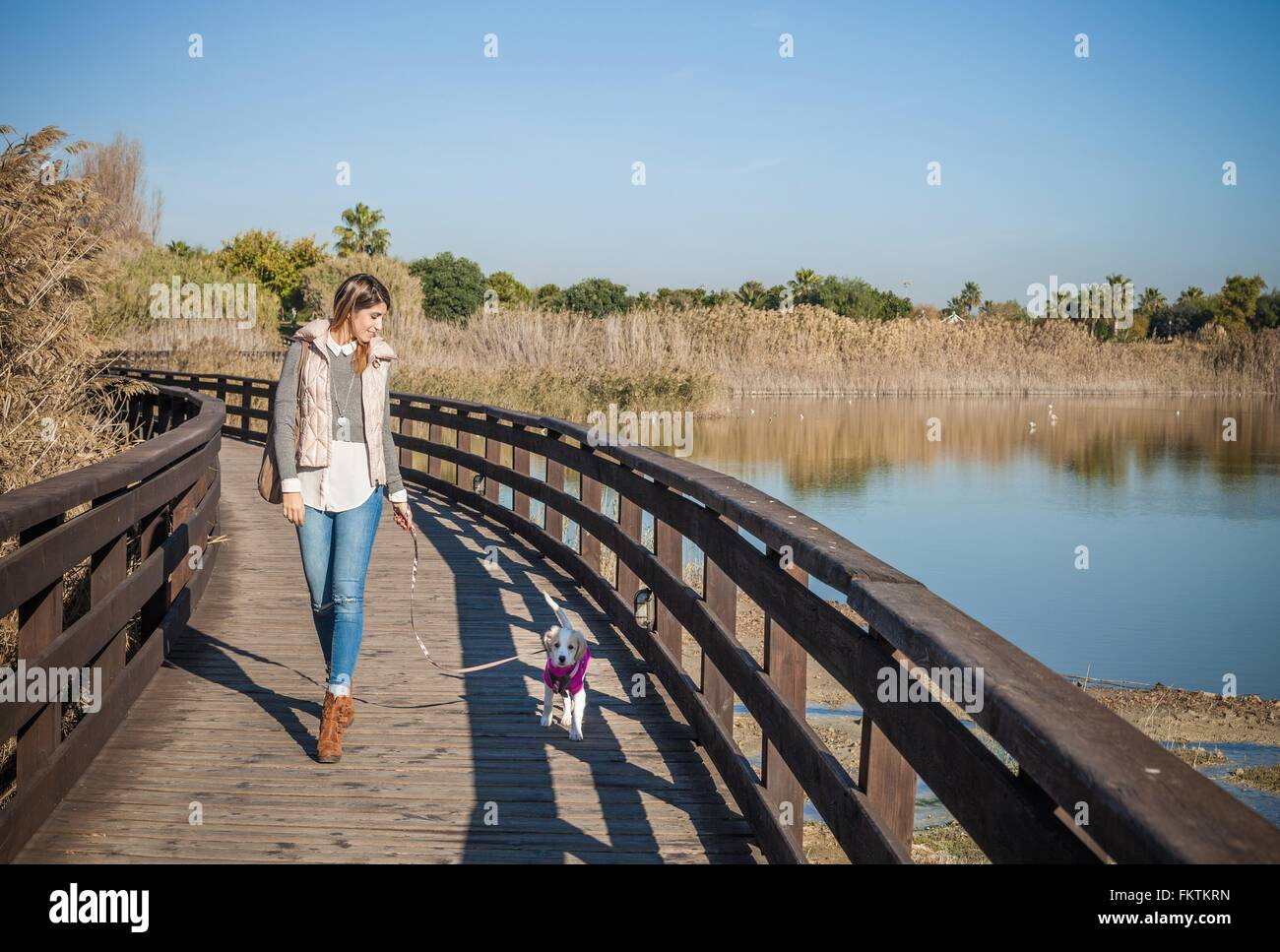 Full length front view   young woman wooden elevated walkway walking dog - Stock Image