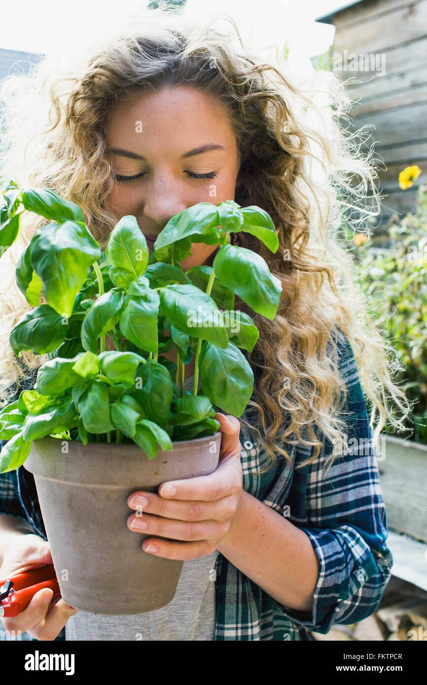Young woman holding fresh basil in pot - Stock Image