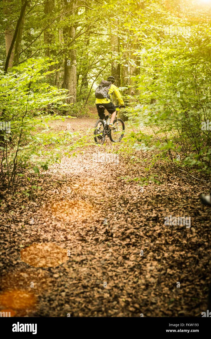 Rear view of mature male mountain biker cycling on forest trail - Stock Image
