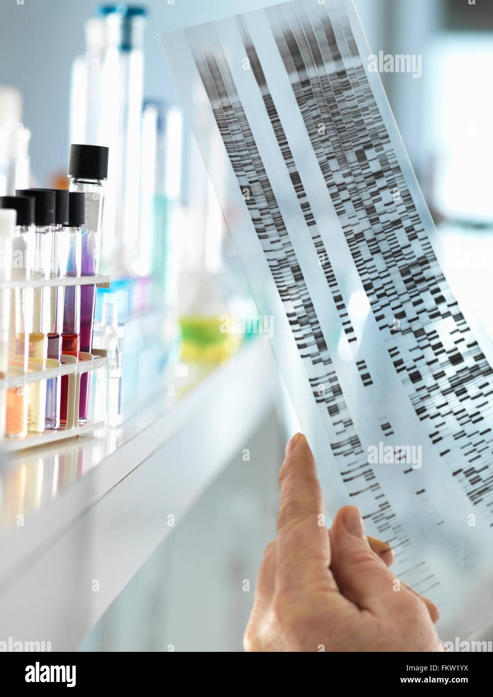 Scientist viewing a DNA sequence gel to understand the genetic information of a human in a laboratory - Stock Image