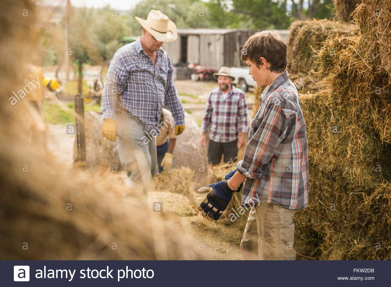 Mature men and boy on farm moving hay bales - Stock Image