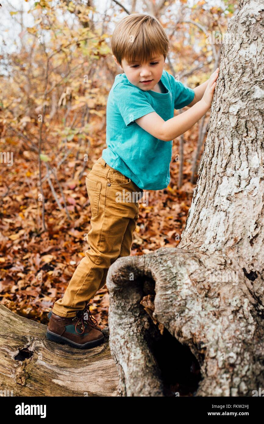 Young boy in forest, climbing tree - Stock Image