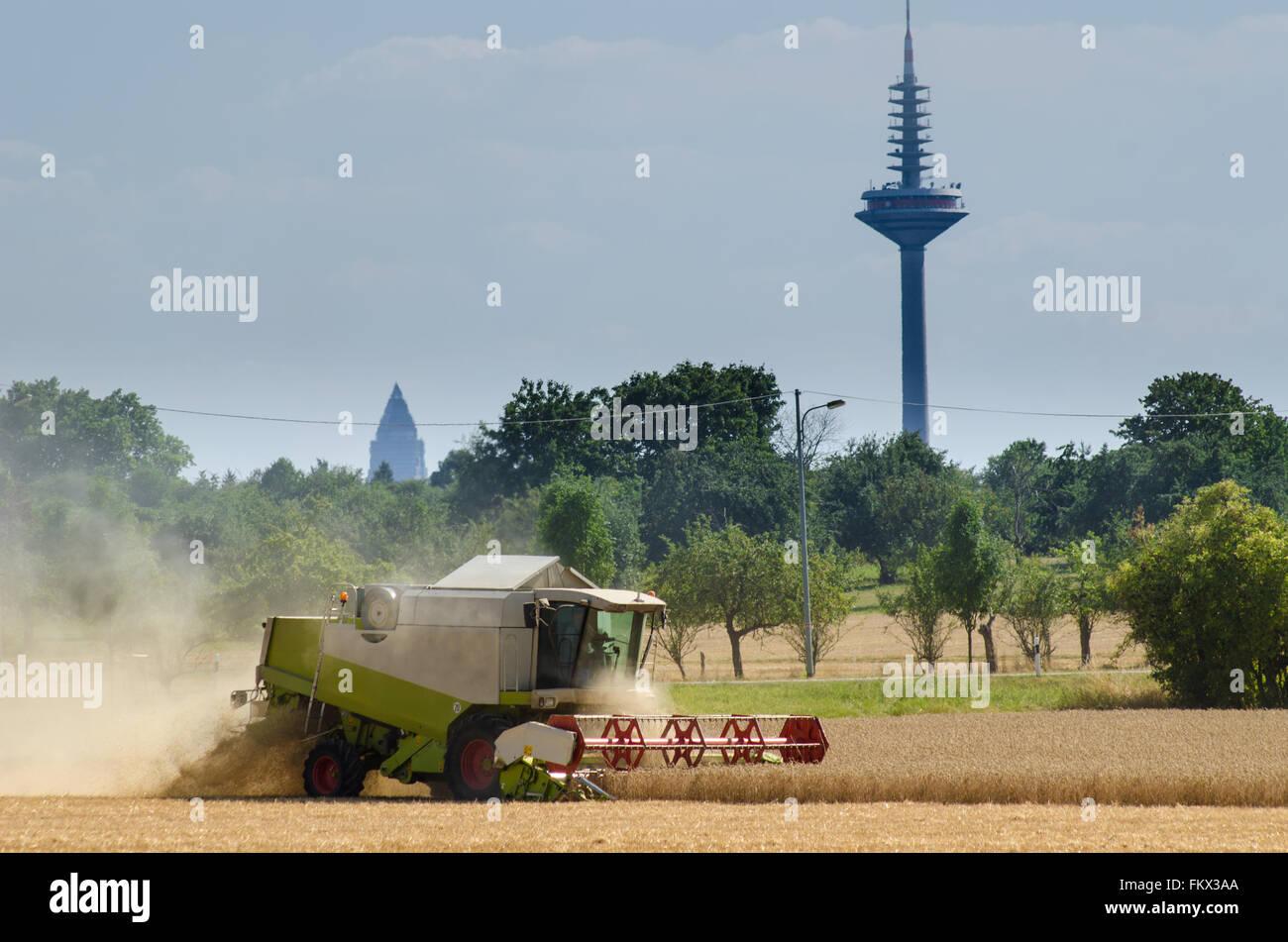 Harvesting harvester near city - Stock Image
