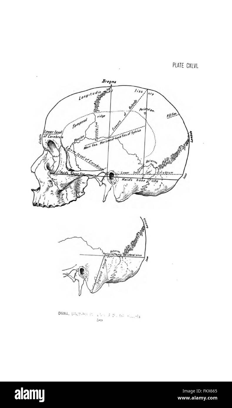 Surgical anatomy of the head and neck by Deaver, John B. (John Stock ...