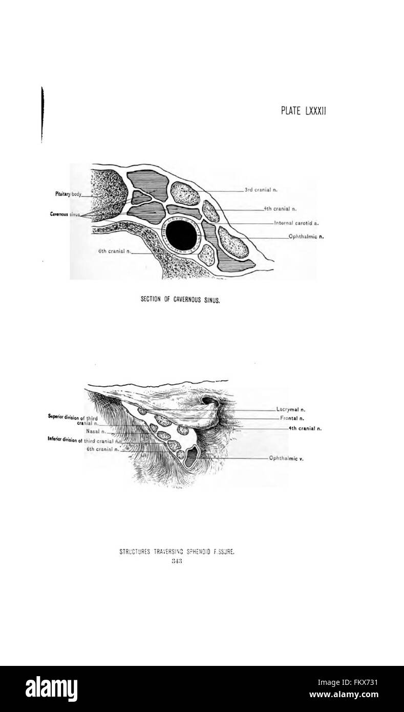 Surgical Anatomy Head Neck Deaver Black And White Stock Photos