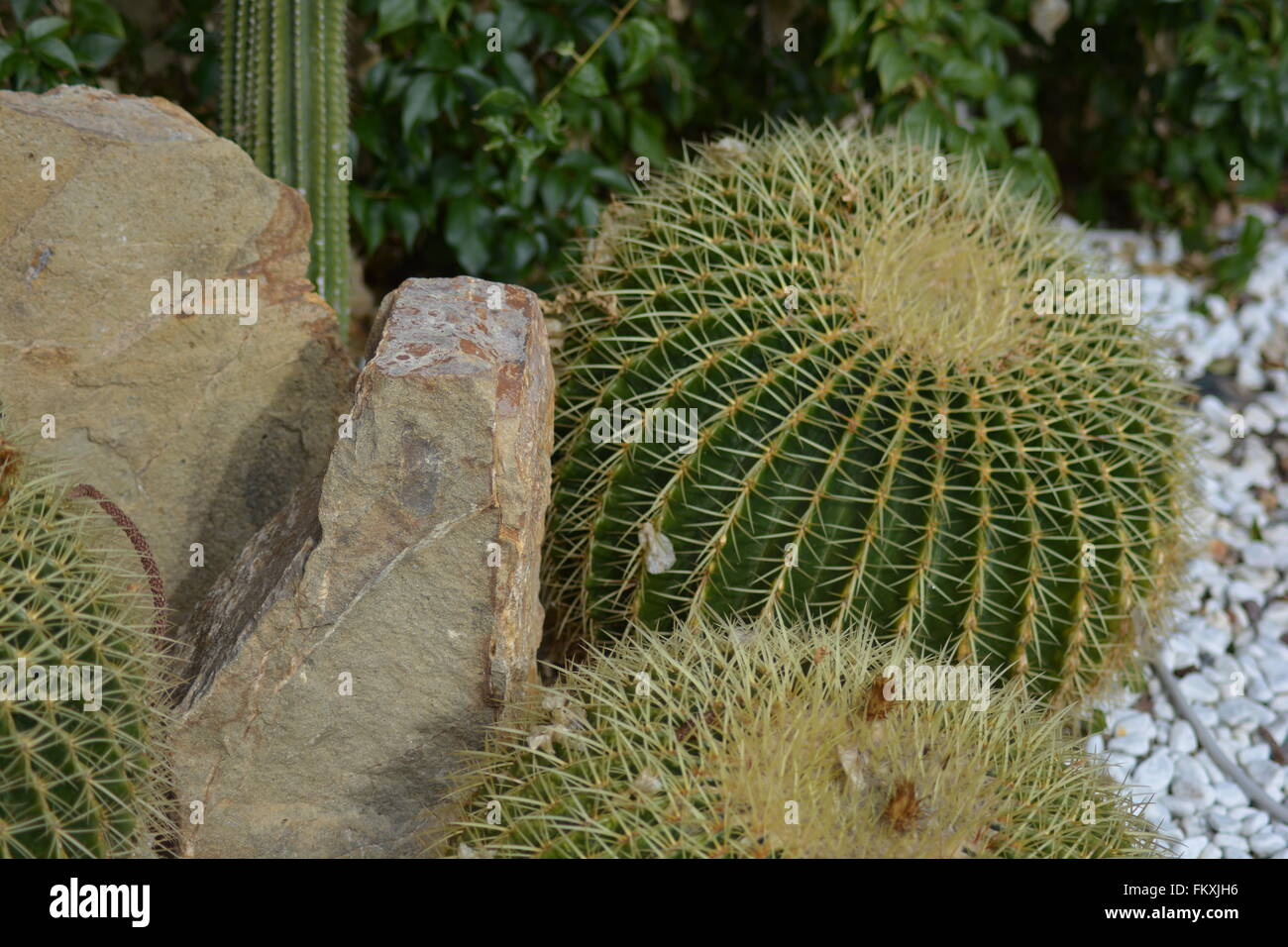 6 Lessons For Mediterranean Climate Gardening: Mediterranean Cactus Stock Photos & Mediterranean Cactus