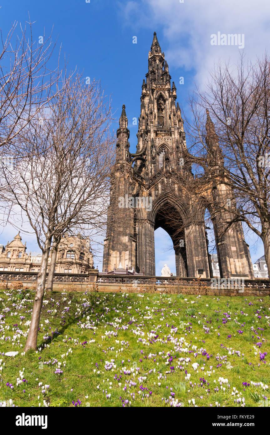 Edinburgh, UK. 10th March 2016 Crocuses out in bright sunshine below the Scott Monument in Princes Street, Edinburgh, Stock Photo