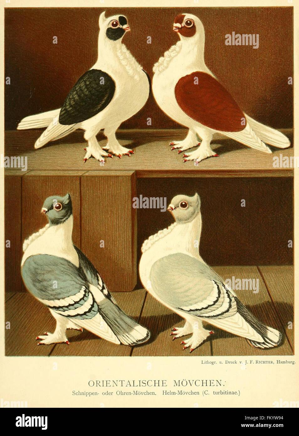 Illustrirtes Mustertauben-Buch (Plate 77) - Stock Image