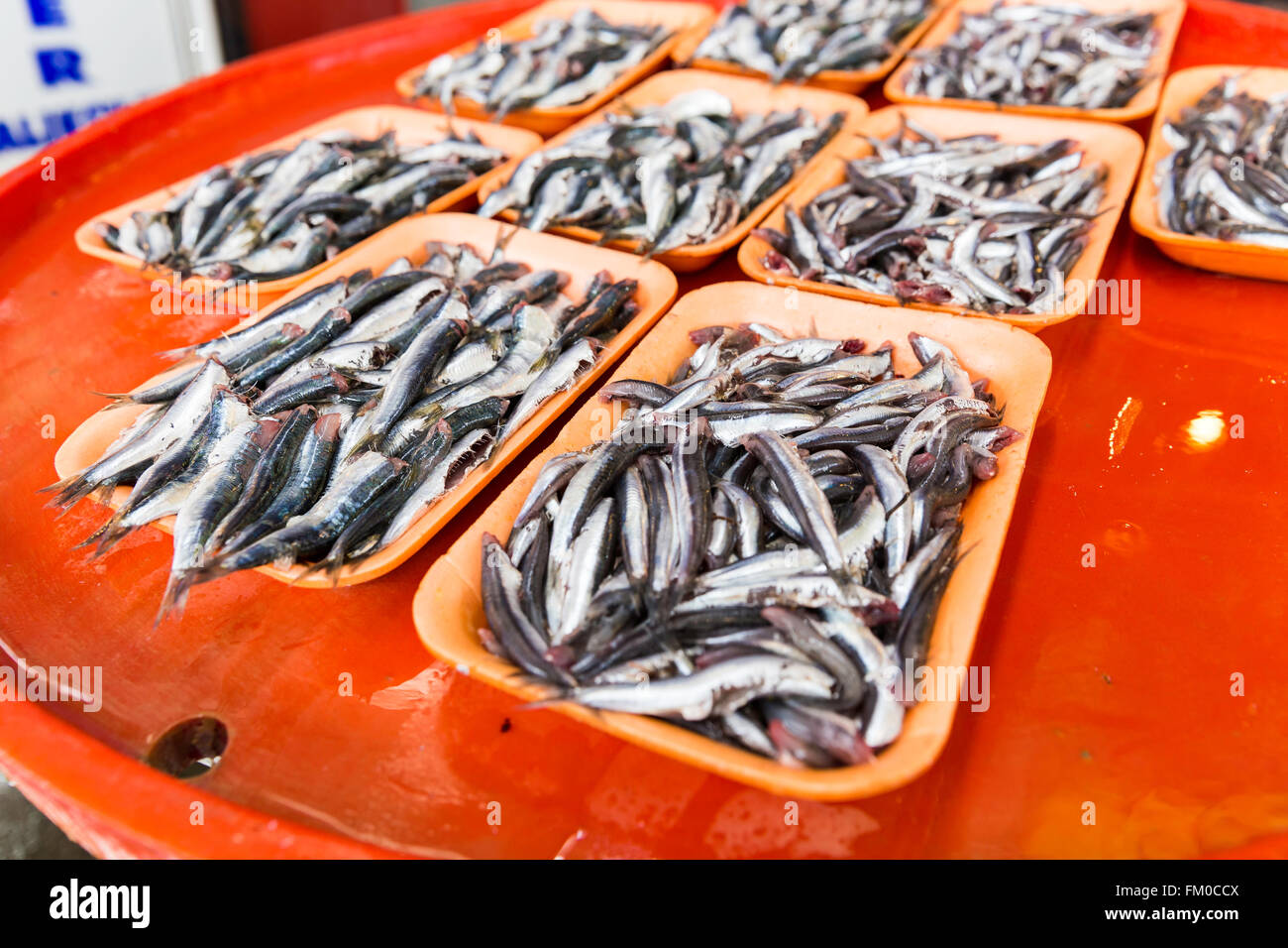 Group of sardines on a colorful bench for sale in fresh seafood market. Fresh sea fishes in a Turkish fish market - Stock Image