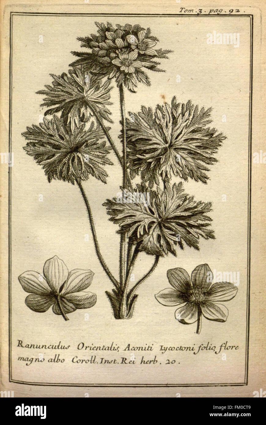 Relation d'un voyage du Levant (Plate 10) - Stock Image