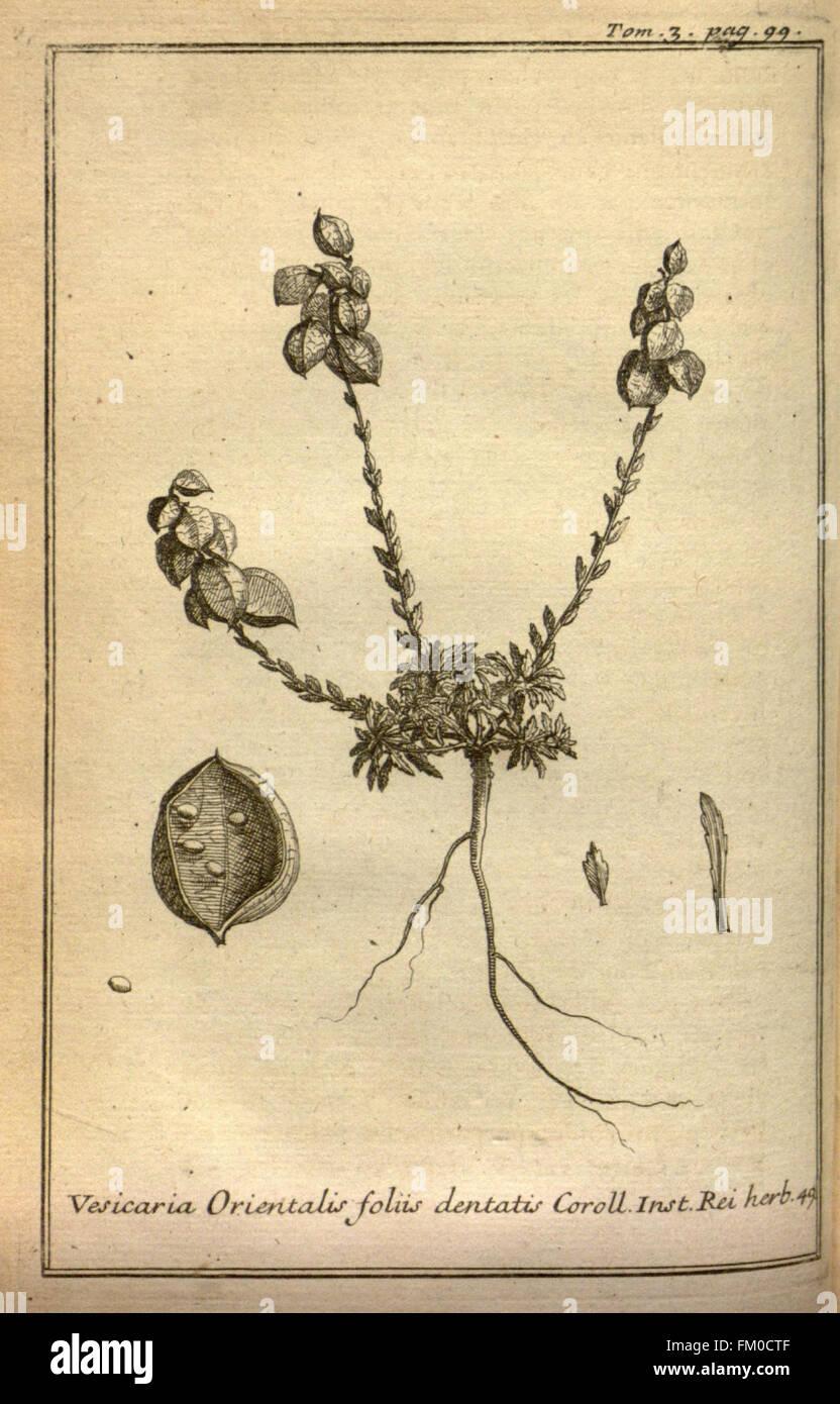 Relation d'un voyage du Levant (Plate 14) - Stock Image