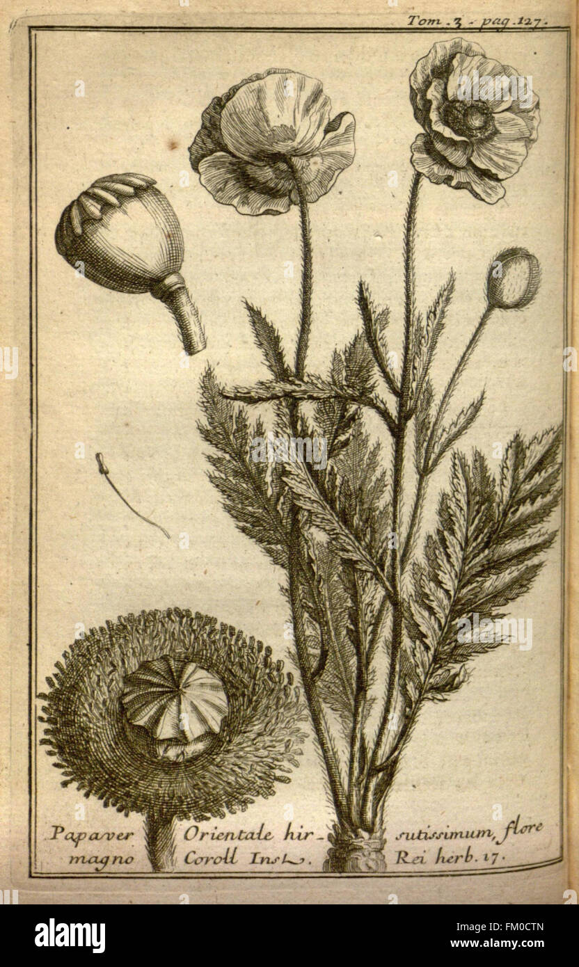 Relation d'un voyage du Levant (Plate 17) - Stock Image