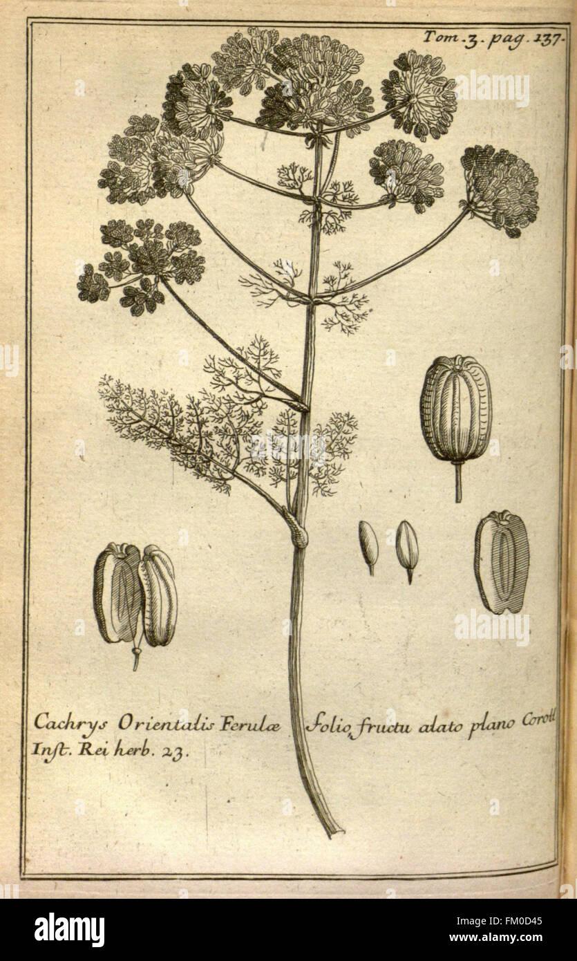 Relation d'un voyage du Levant (Plate 19) - Stock Image