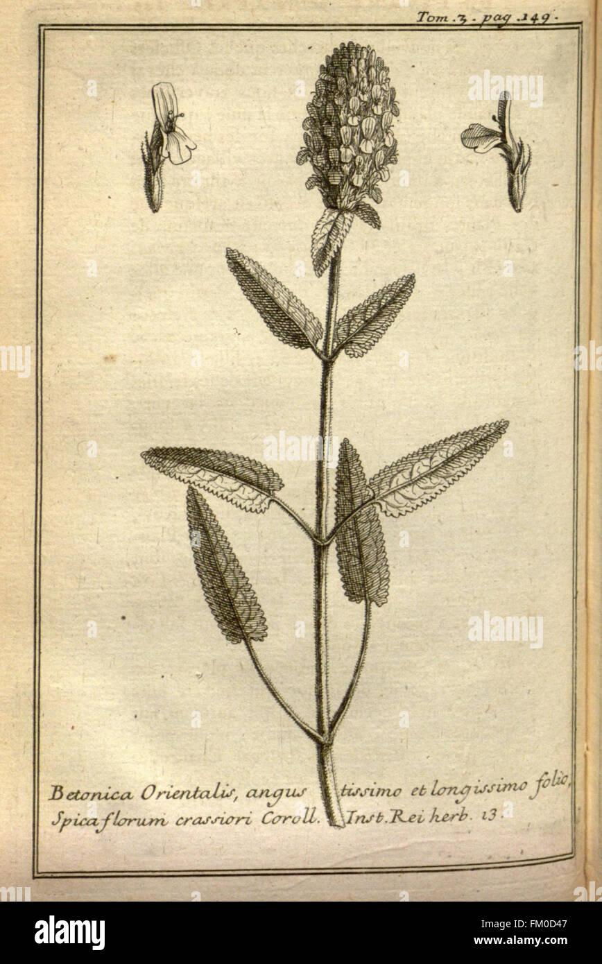 Relation d'un voyage du Levant (Plate 21) - Stock Image