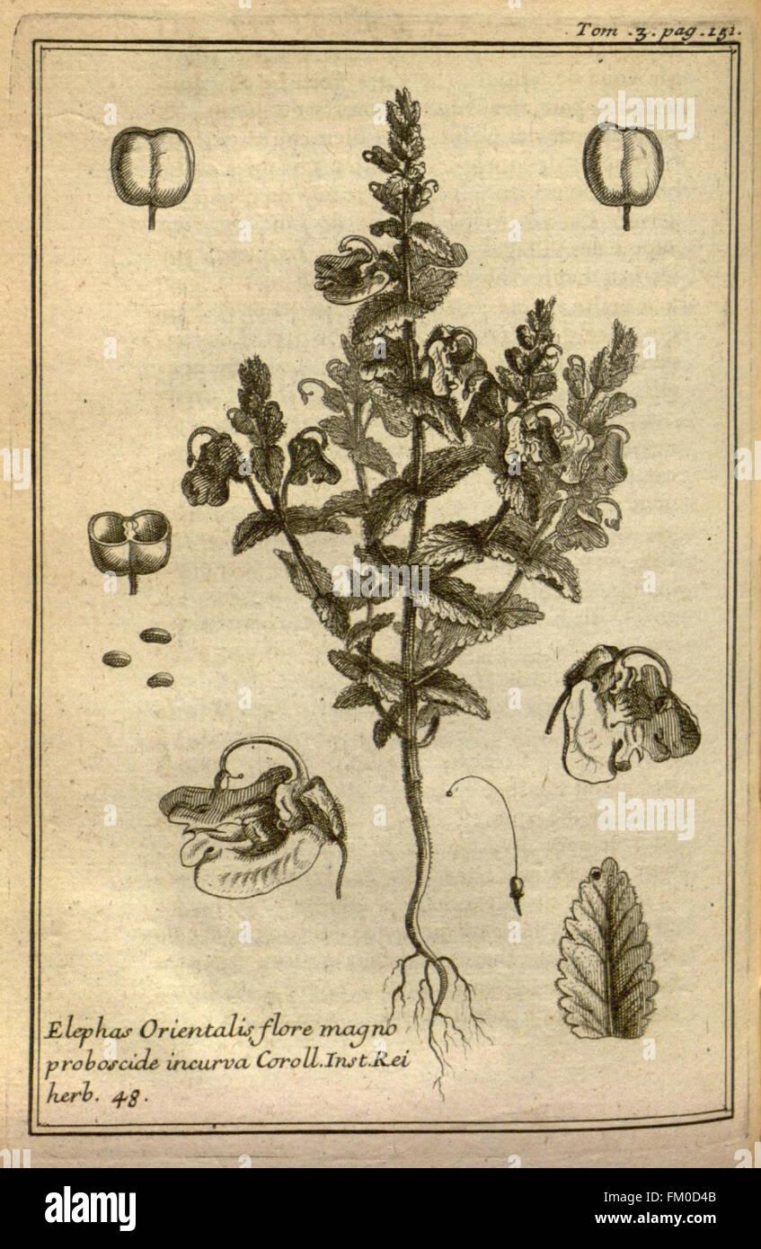 Relation d'un voyage du Levant (Plate 22) - Stock Image