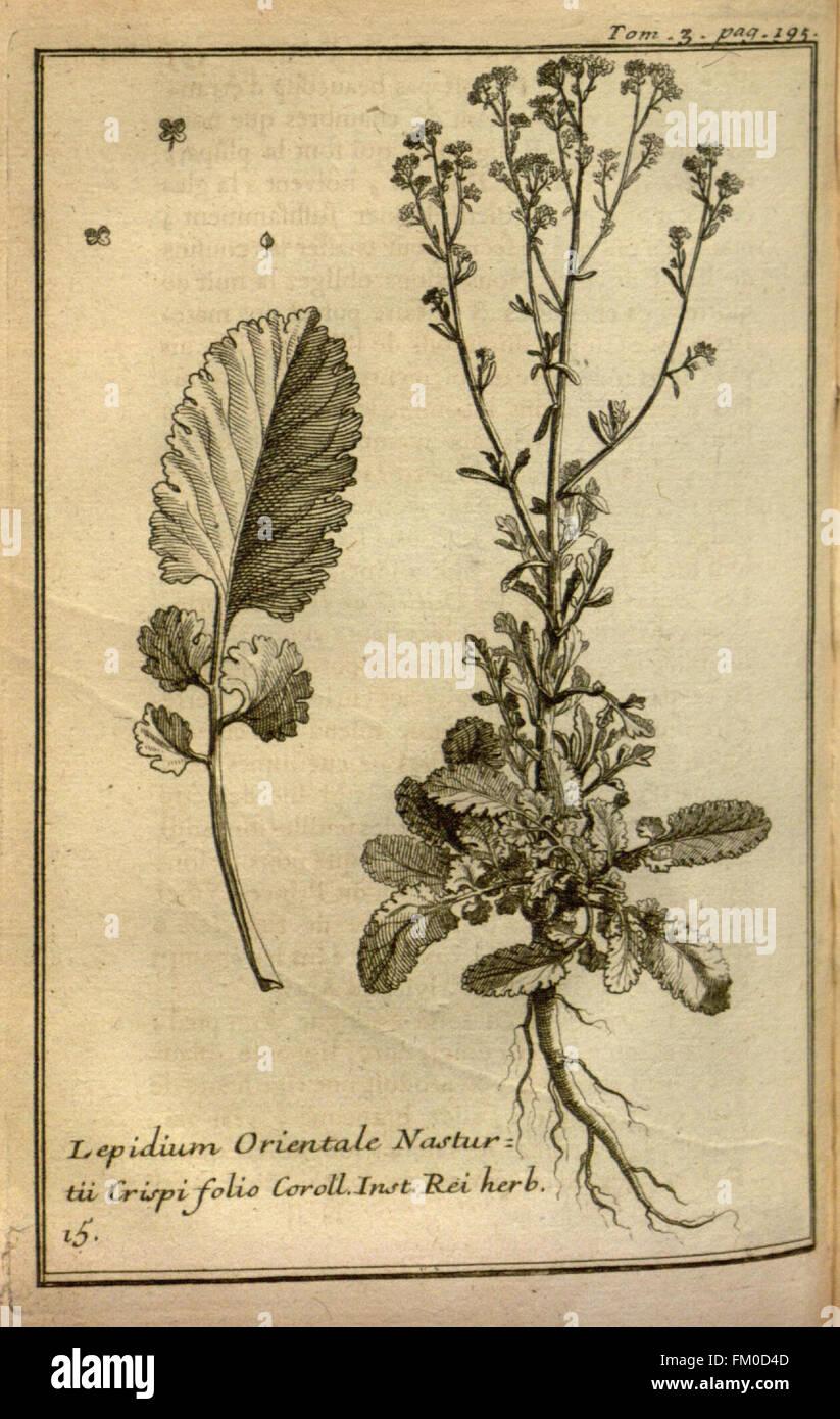 Relation d'un voyage du Levant (Plate 28) - Stock Image