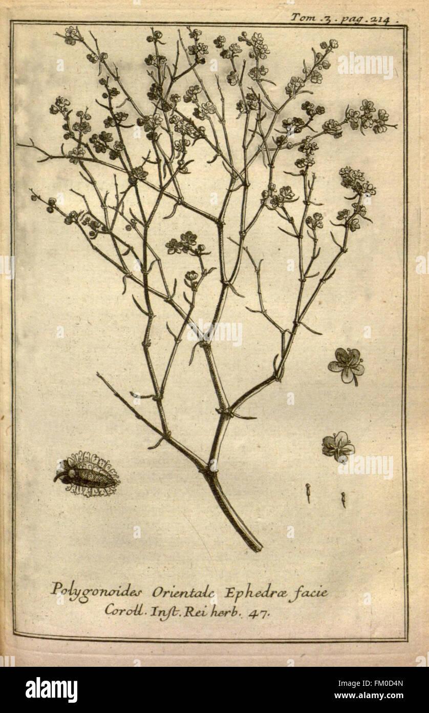 Relation d'un voyage du Levant (Plate 31) - Stock Image