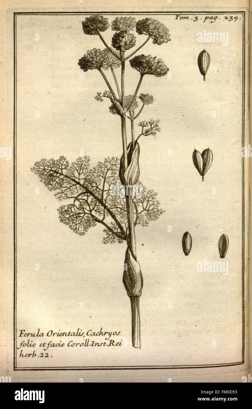 Relation d'un voyage du Levant (Plate 35) - Stock Image