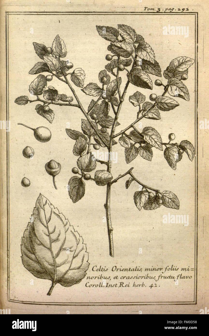 Relation d'un voyage du Levant (Plate 42) - Stock Image
