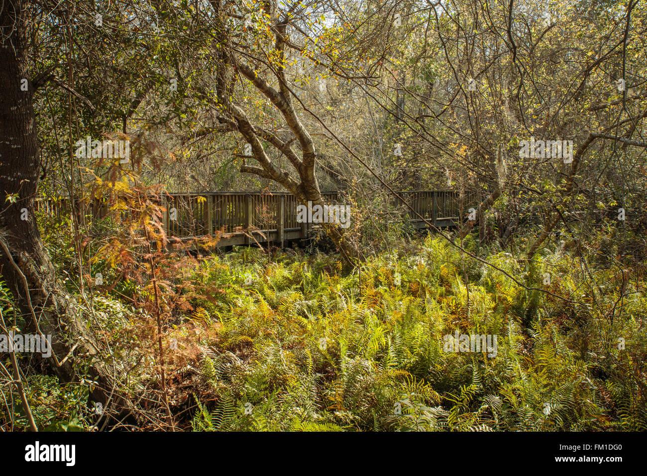 The boardwalk at Sawgrass Lake Park in St. Petersburg, Florida, USA - Stock Image