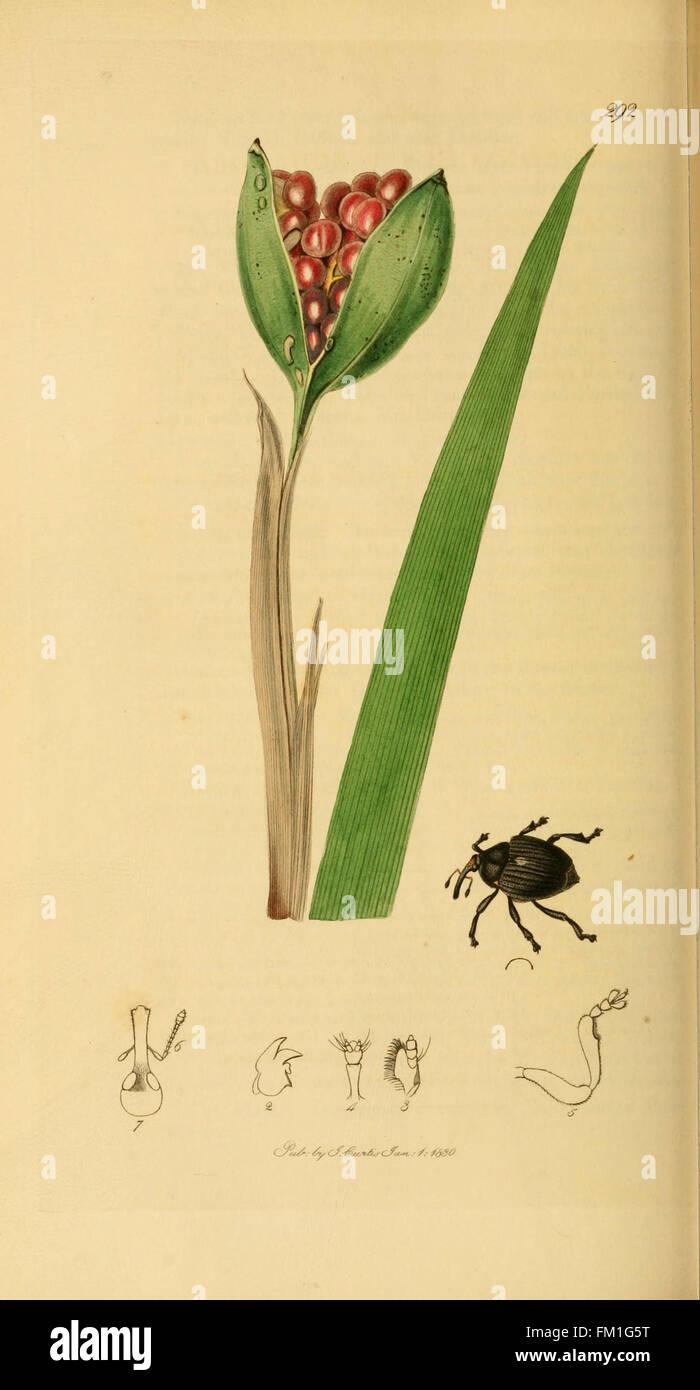 British entomology (Plate 77) - Stock Image