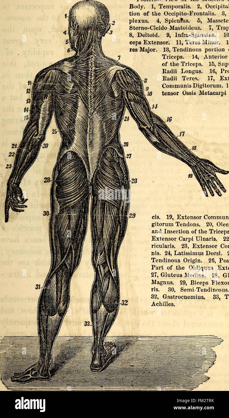 Moderno Anatomy And Physiology Major Colleges Molde - Anatomía de ...