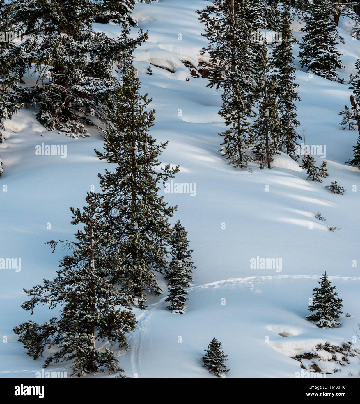 Animal tracks through fresh snow on hill side - Stock Image