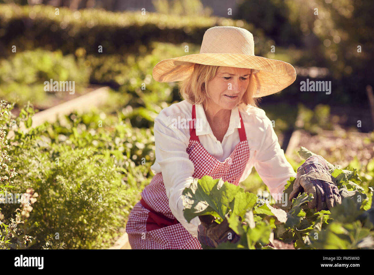 343a56095f47d Senior woman wearing hat and apron