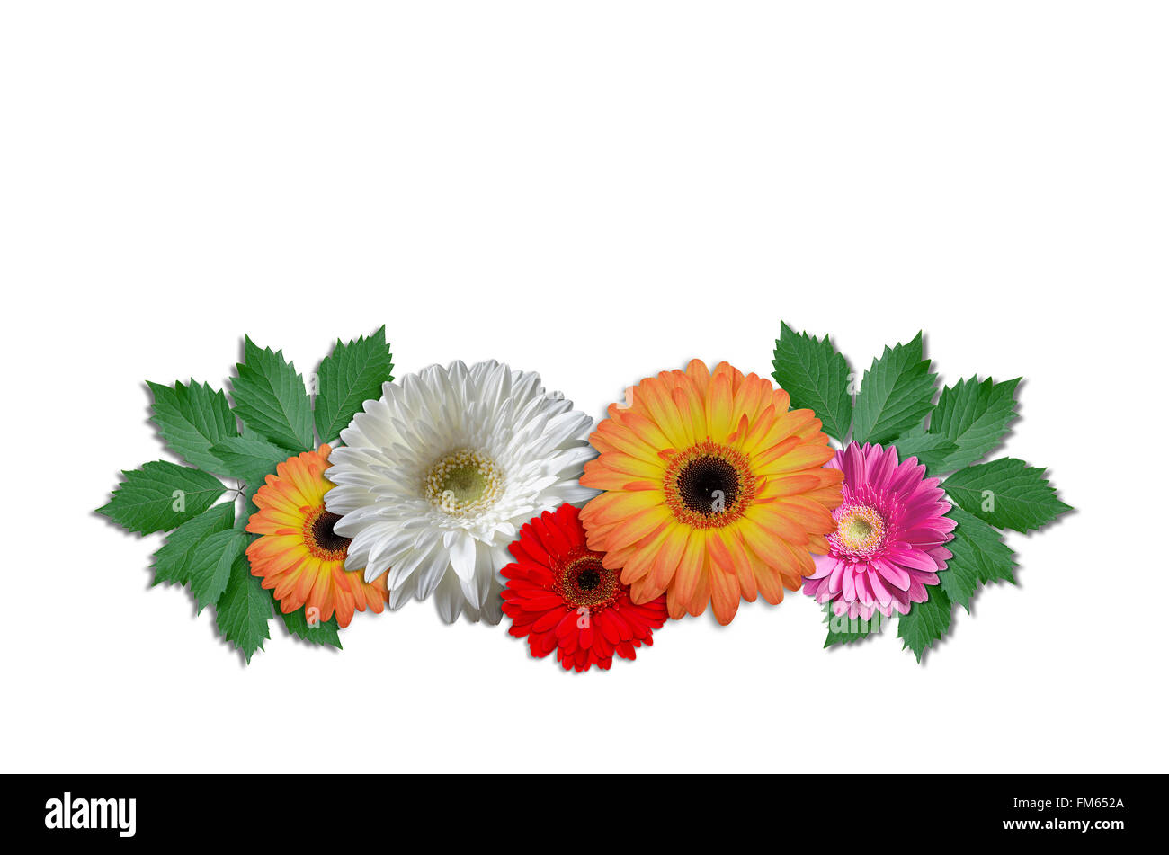 Group flowers daisies with green ivy leaves stock photo 98480658 group flowers daisies with green ivy leaves izmirmasajfo