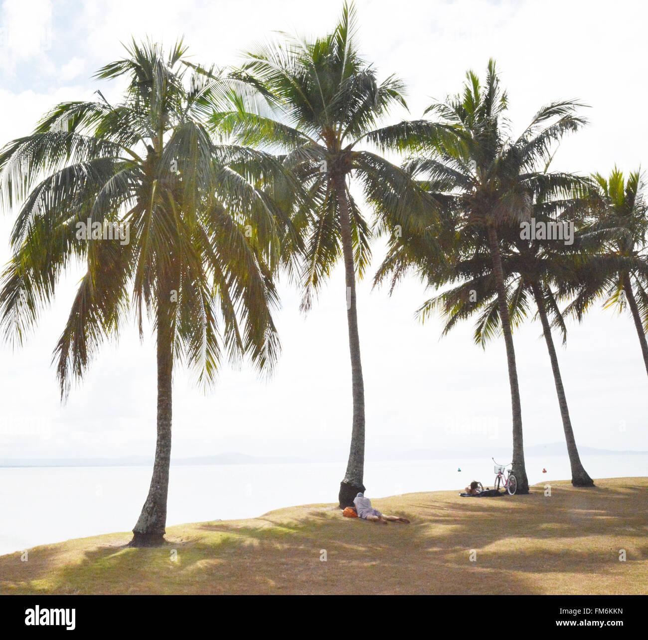 Queensland, Australia. Palm Trees, Port Douglas. - Stock Image