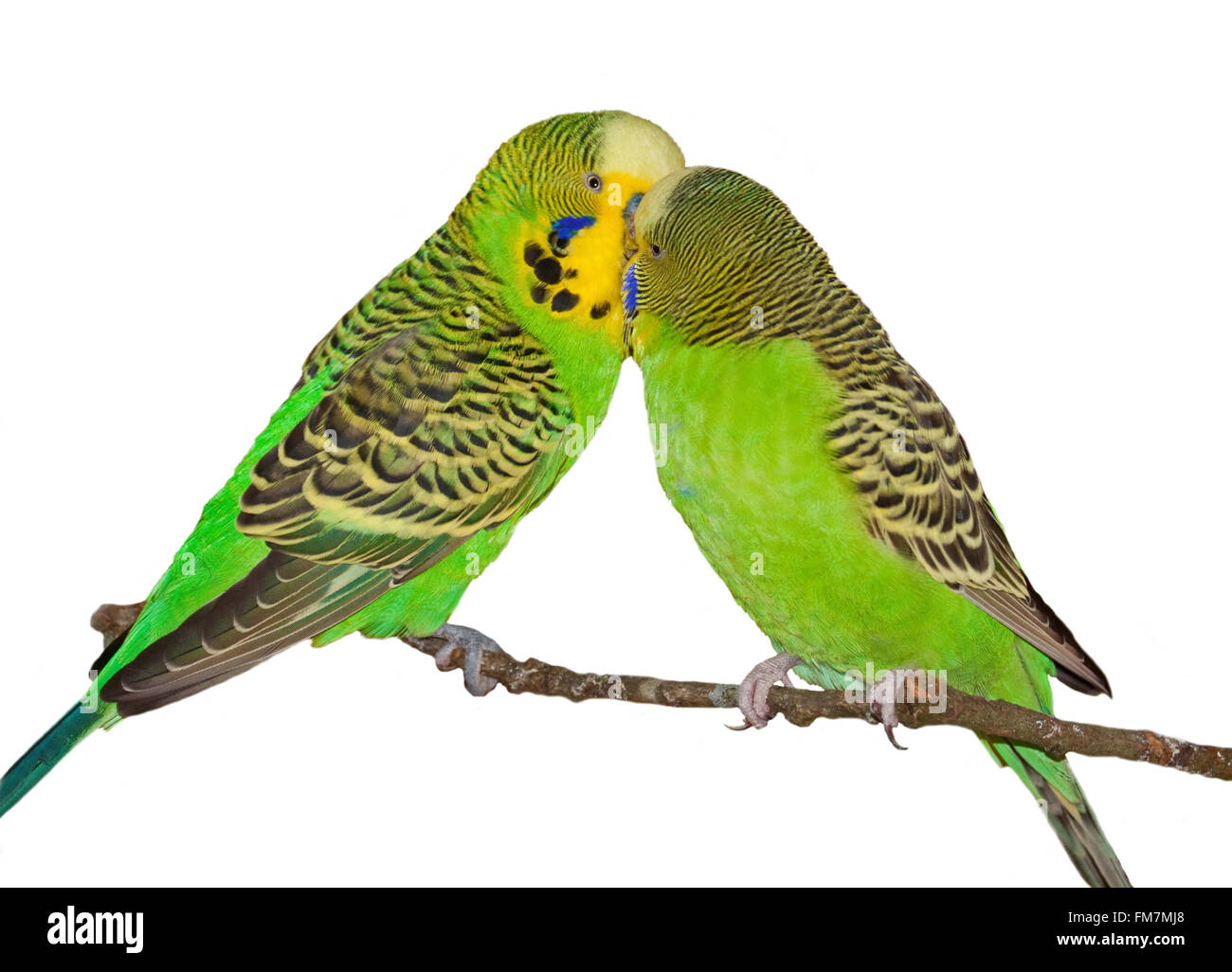 Two Green Bugies Bonding - Stock Image