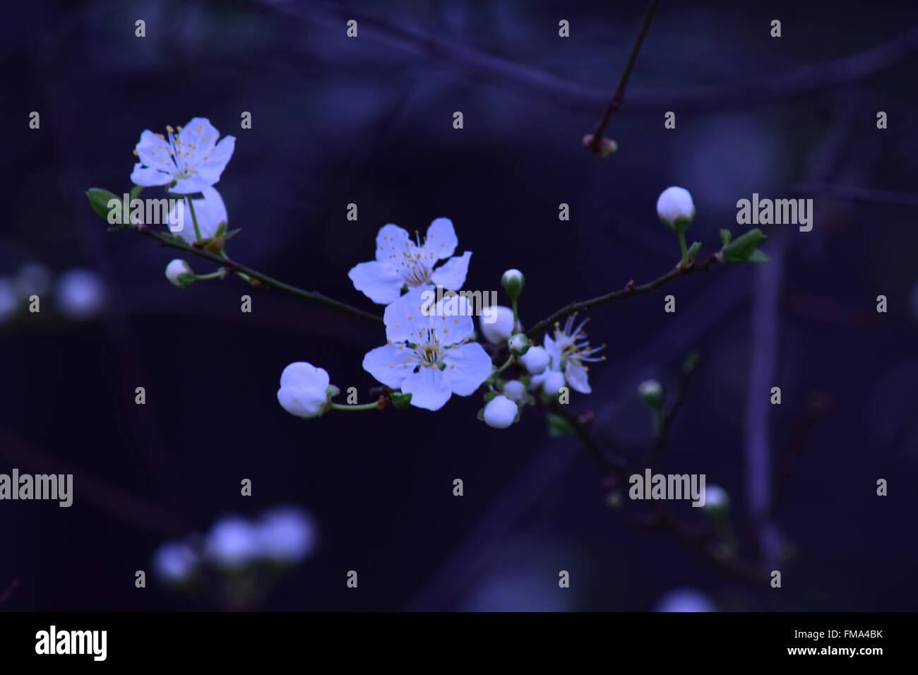 plump - Stock Image