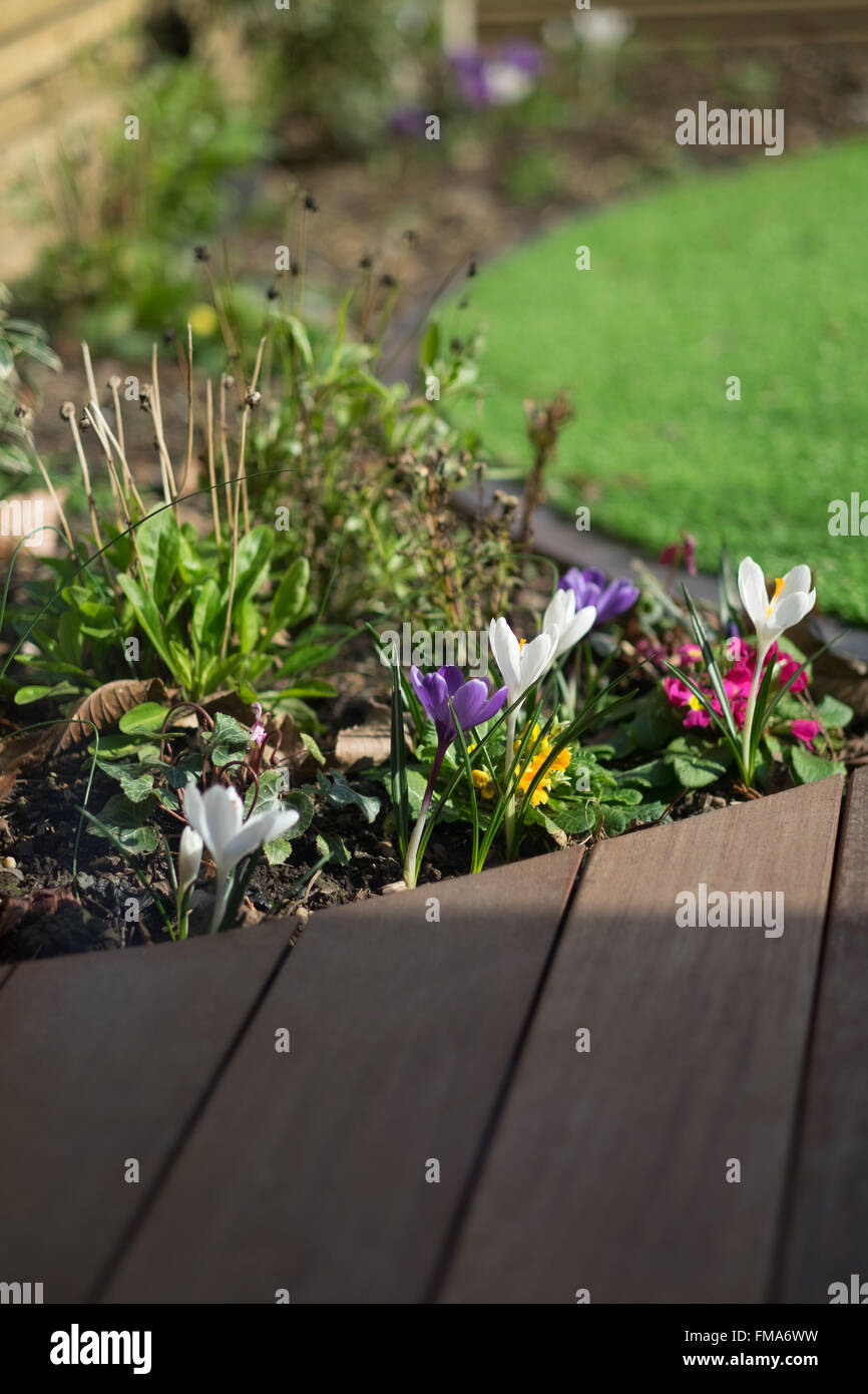 Close up detail of a contemporary urban garden design with circular lawn and hardwood decking Stock Photo