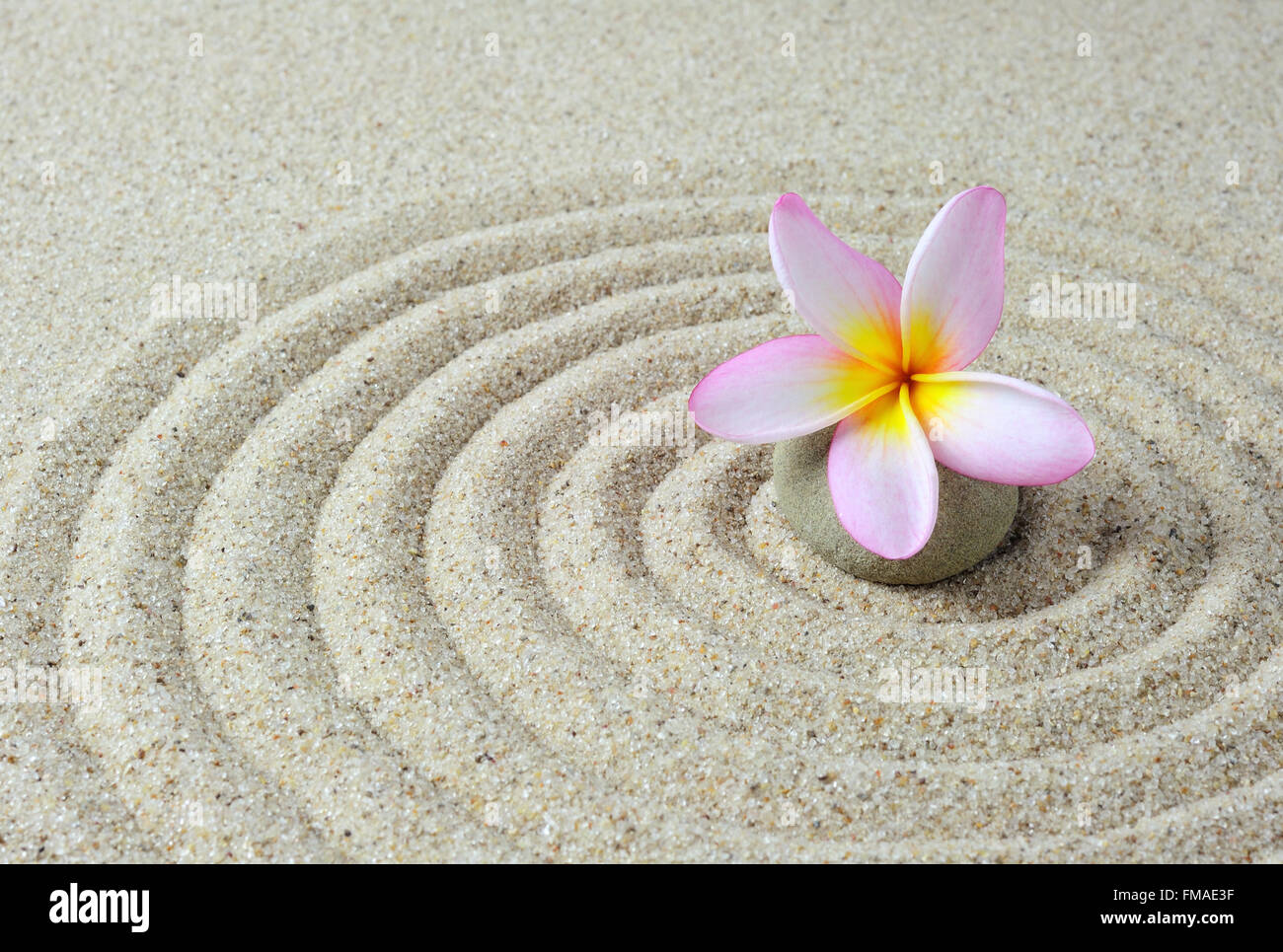zen stones with frangipani flower with sand background - Stock Image