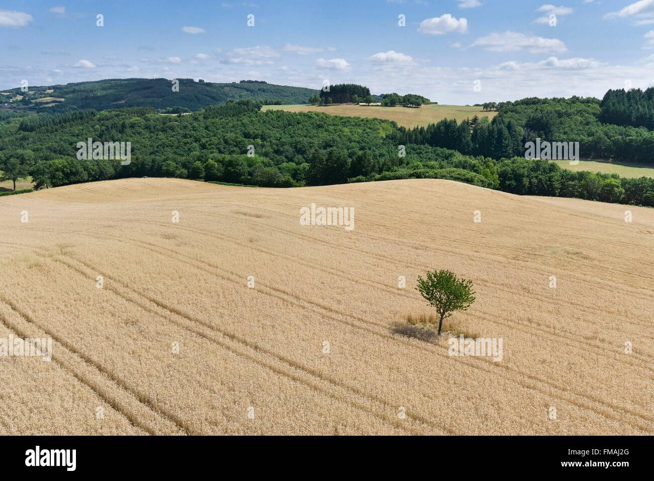 France, Puy de Dome, Saint Angel, wheat field (aerial view) - Stock Image