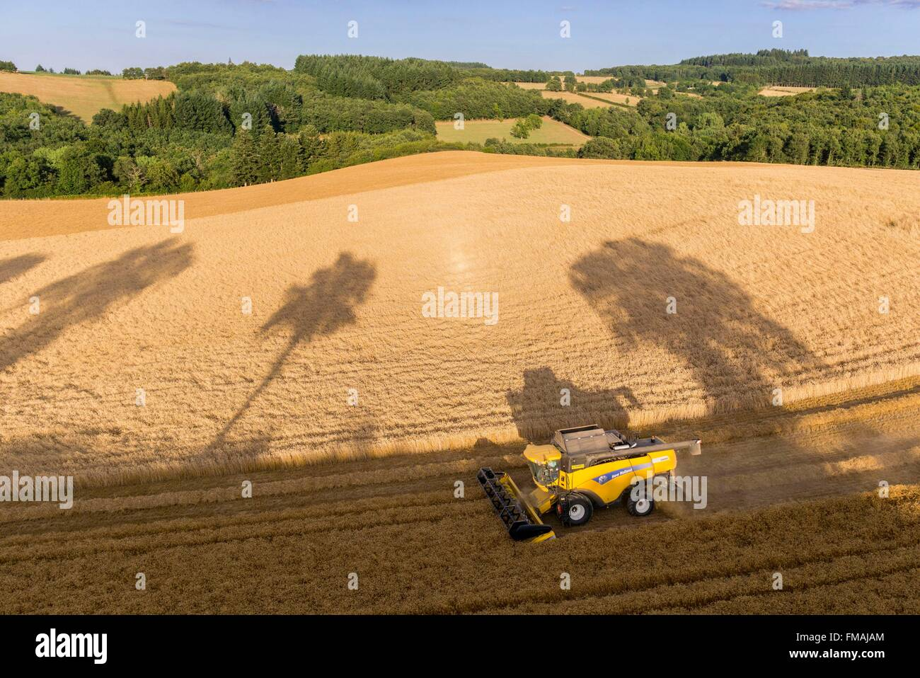 France, Puy de Dome, Saint Angel, harvest a wheat field (aerial view) - Stock Image