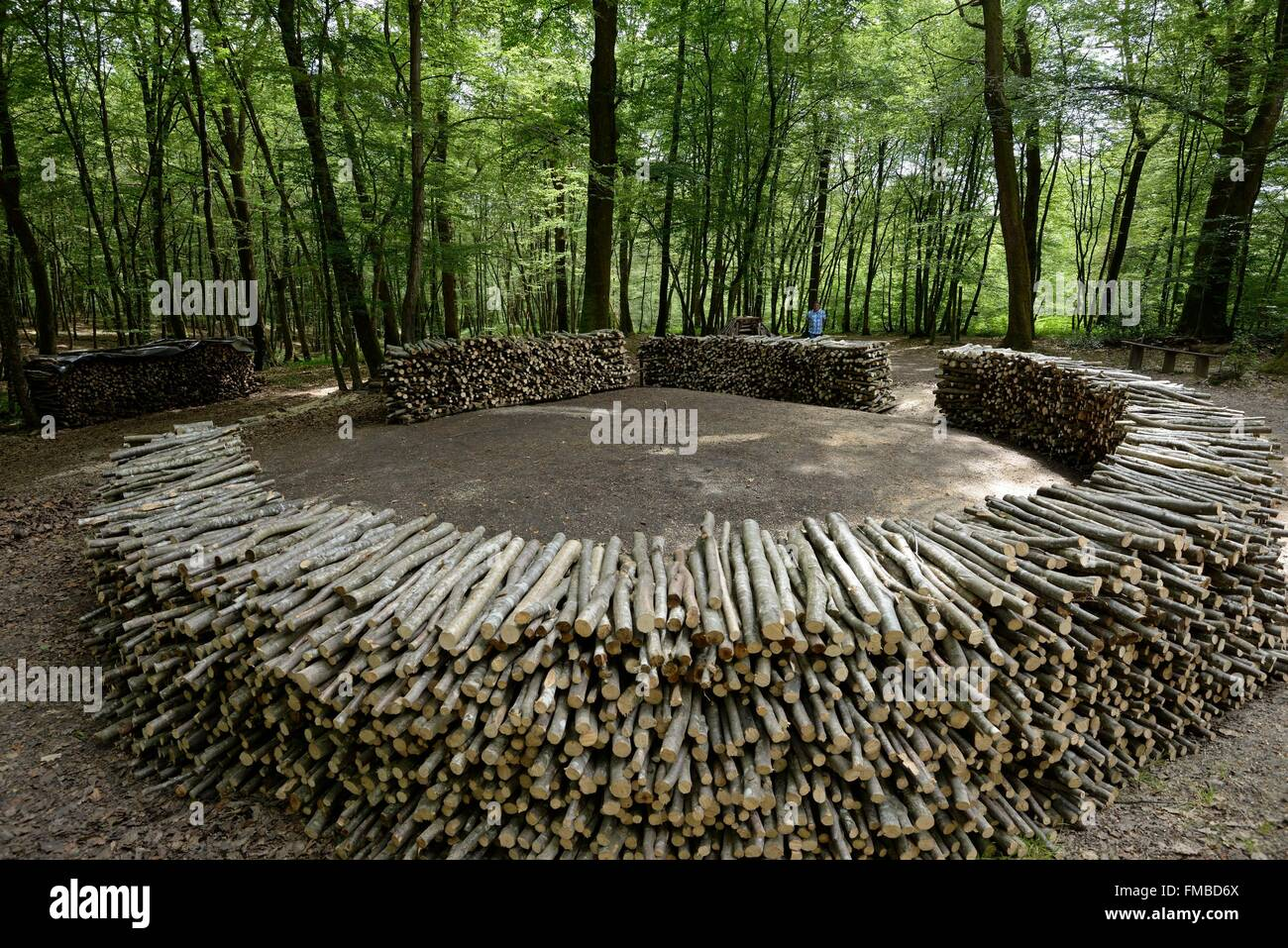 France, Jura, near Dole, Chaux forest, La Vieille Loye, Baraques du 14, wood charcoal, preparation of a wood grinder - Stock Image