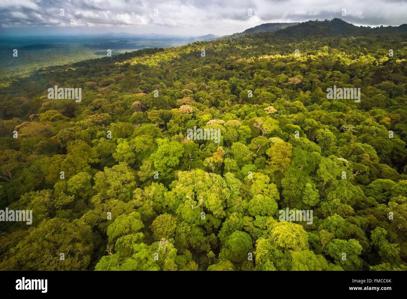France, Guyana, French Guyana Amazonian Park, heart area, Camopi, Mount Itoupe (830 m), the second summit of French - Stock Image