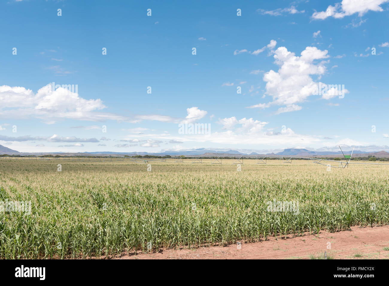 A center pivot irrigation system using rotator style pivot applicator sprinklers near Hofmeyer in a corn field in - Stock Image