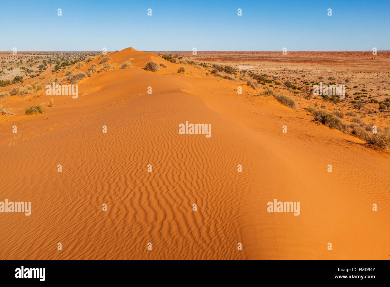 'Big Red', sand dune at the eastern edge of the Simpson Desert, near Birdsville in Central West Queensland, - Stock Image
