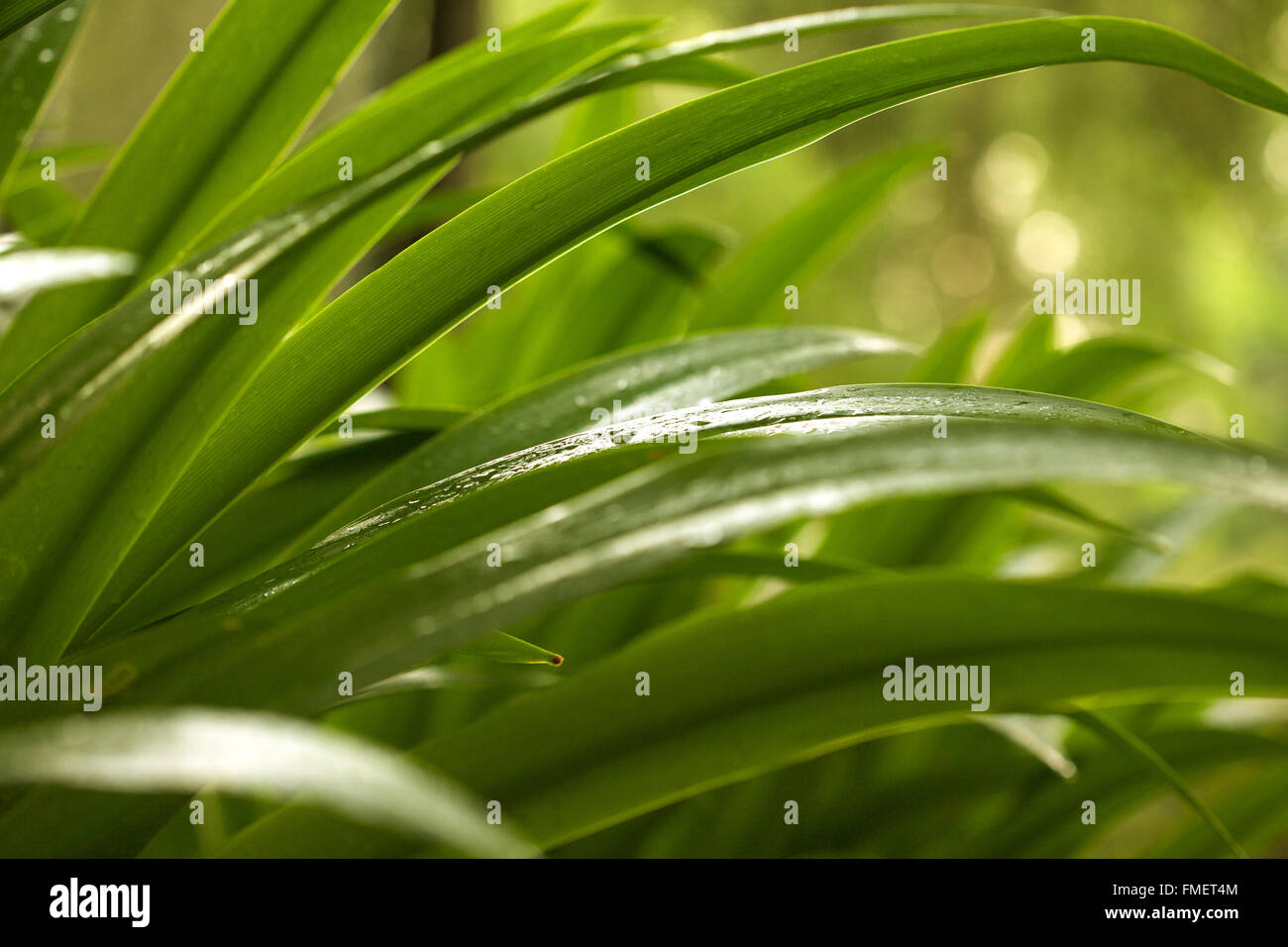 Wet Leaves Stock Photos Wet Leaves Stock Images Alamy