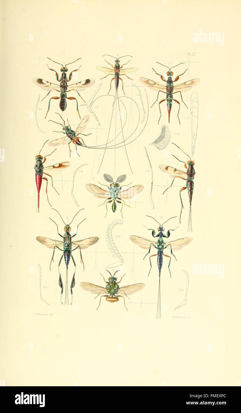 Thesaurus Entomologicus Oxoniensis Pl Stock Photos Thesaurus