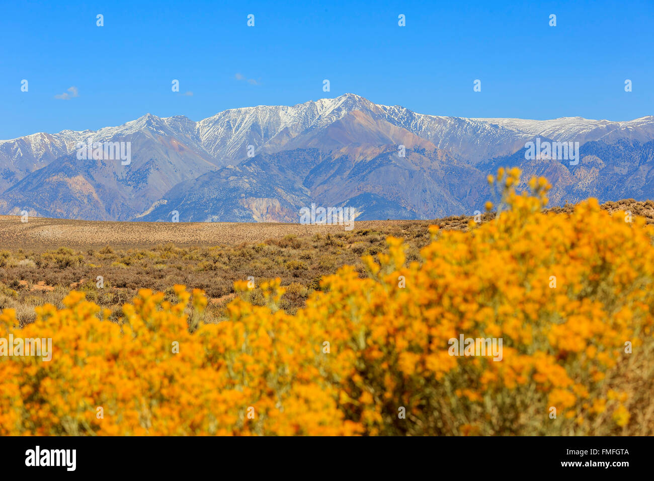 Beautiful fall color with a snow mountain in California - Stock Image