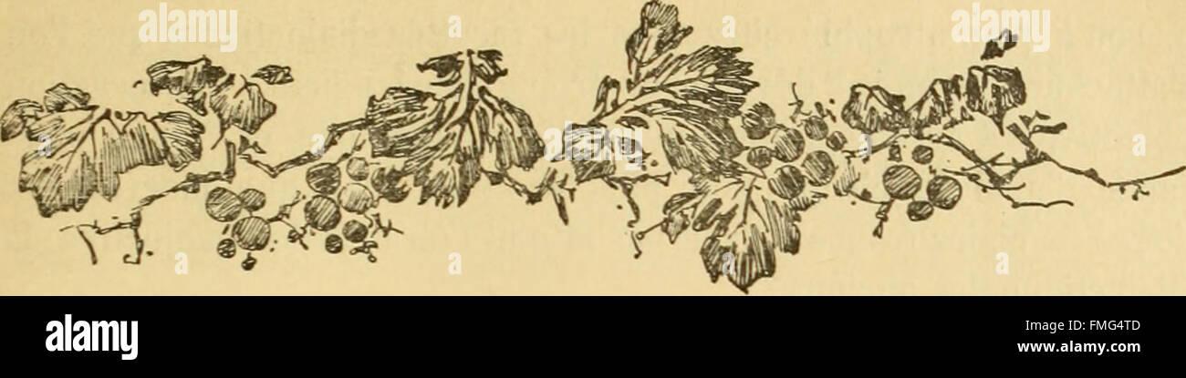 Bulletin biologique de la France et de la Belgique (1891) Stock Photo