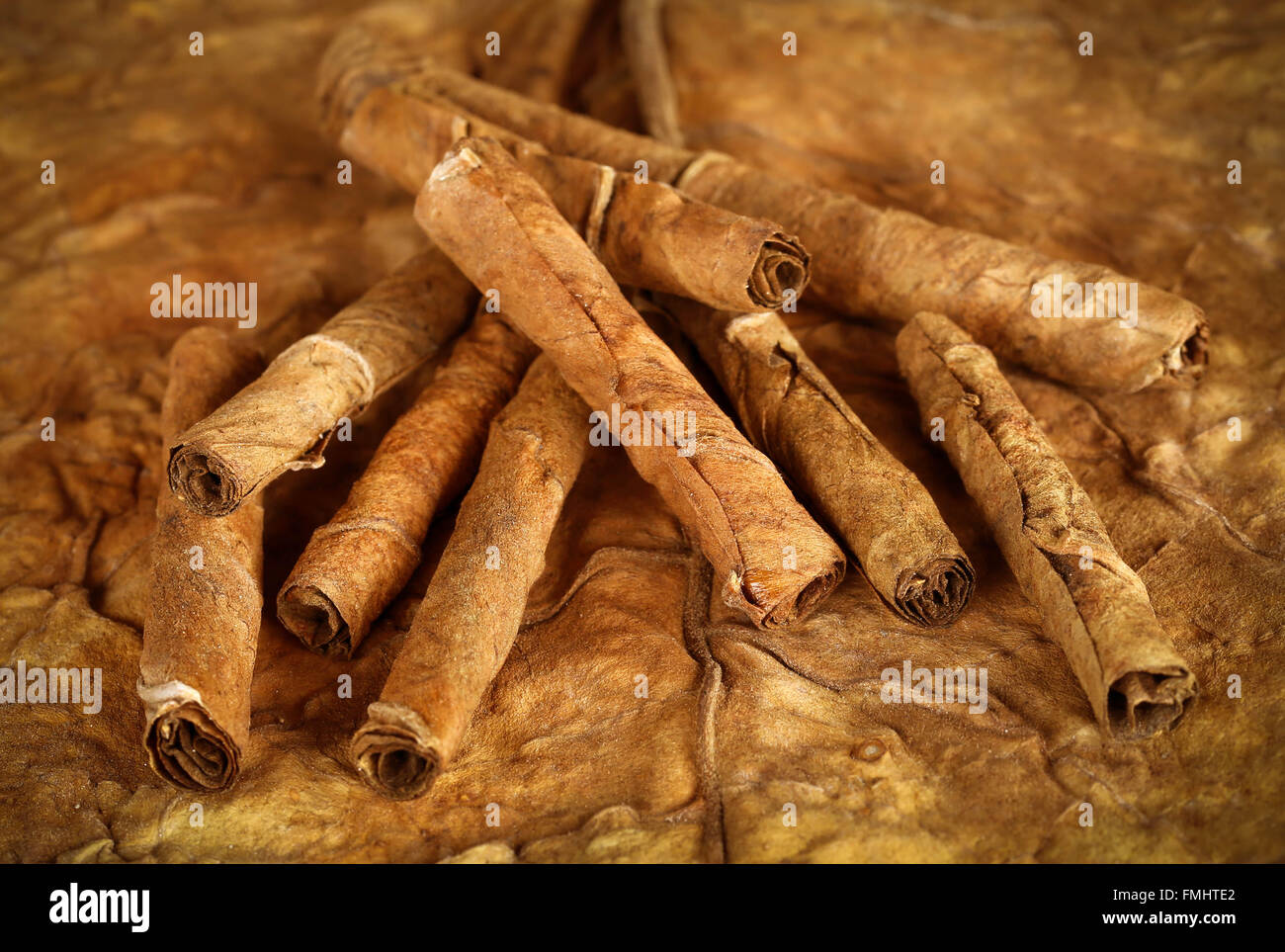 Closeup of some rolled dry tobacco leaves - Stock Image