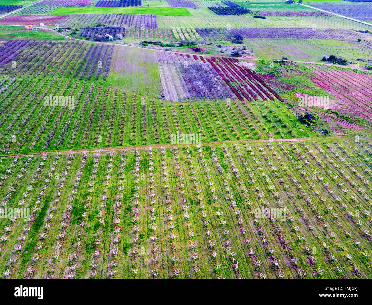 Aerial view over agricultural fields with blooming trees