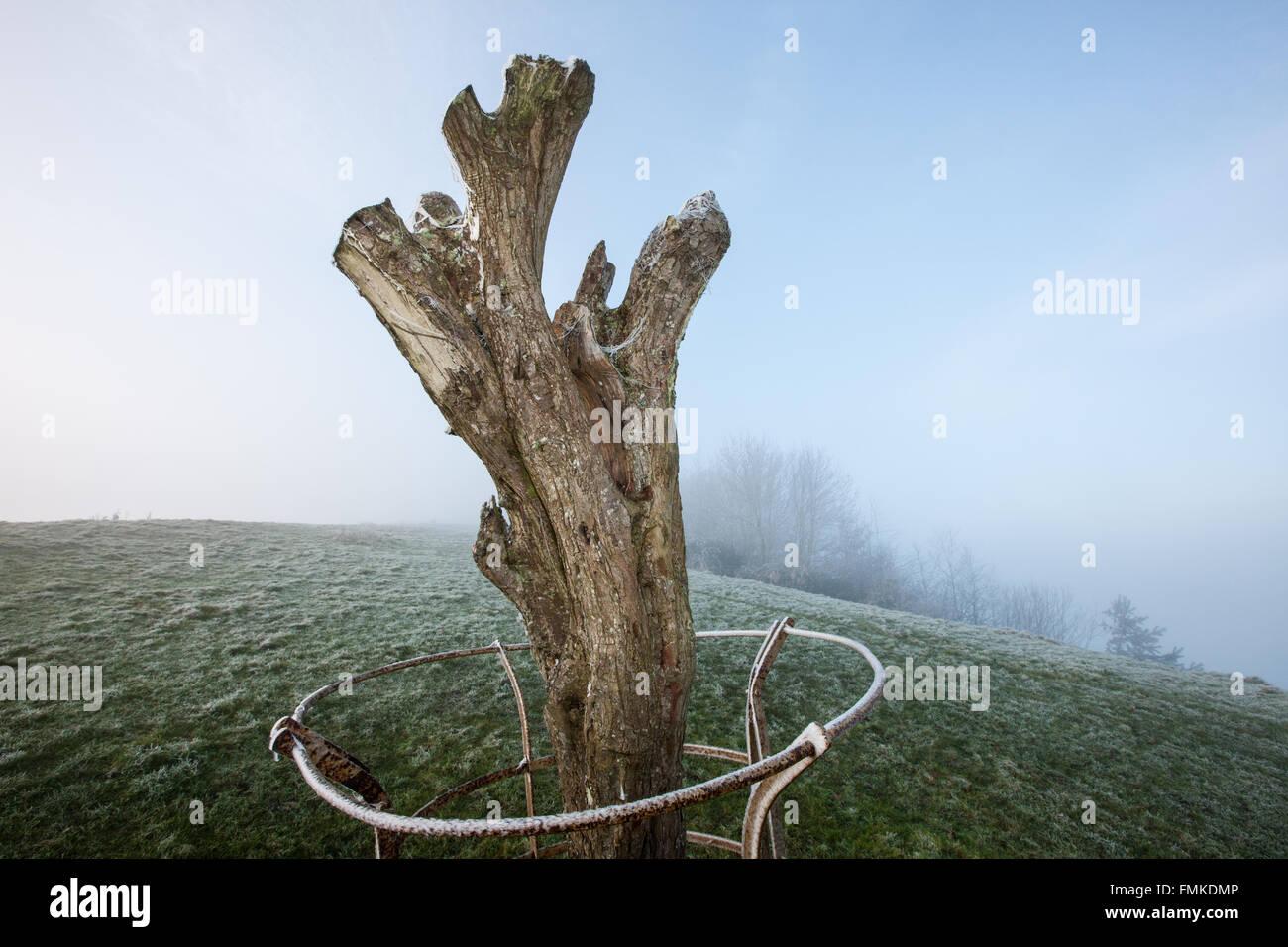 Glastonbury,Town,Tor,Wearyall Hill,Somerset,England,U.K.,Europe. - Stock Image