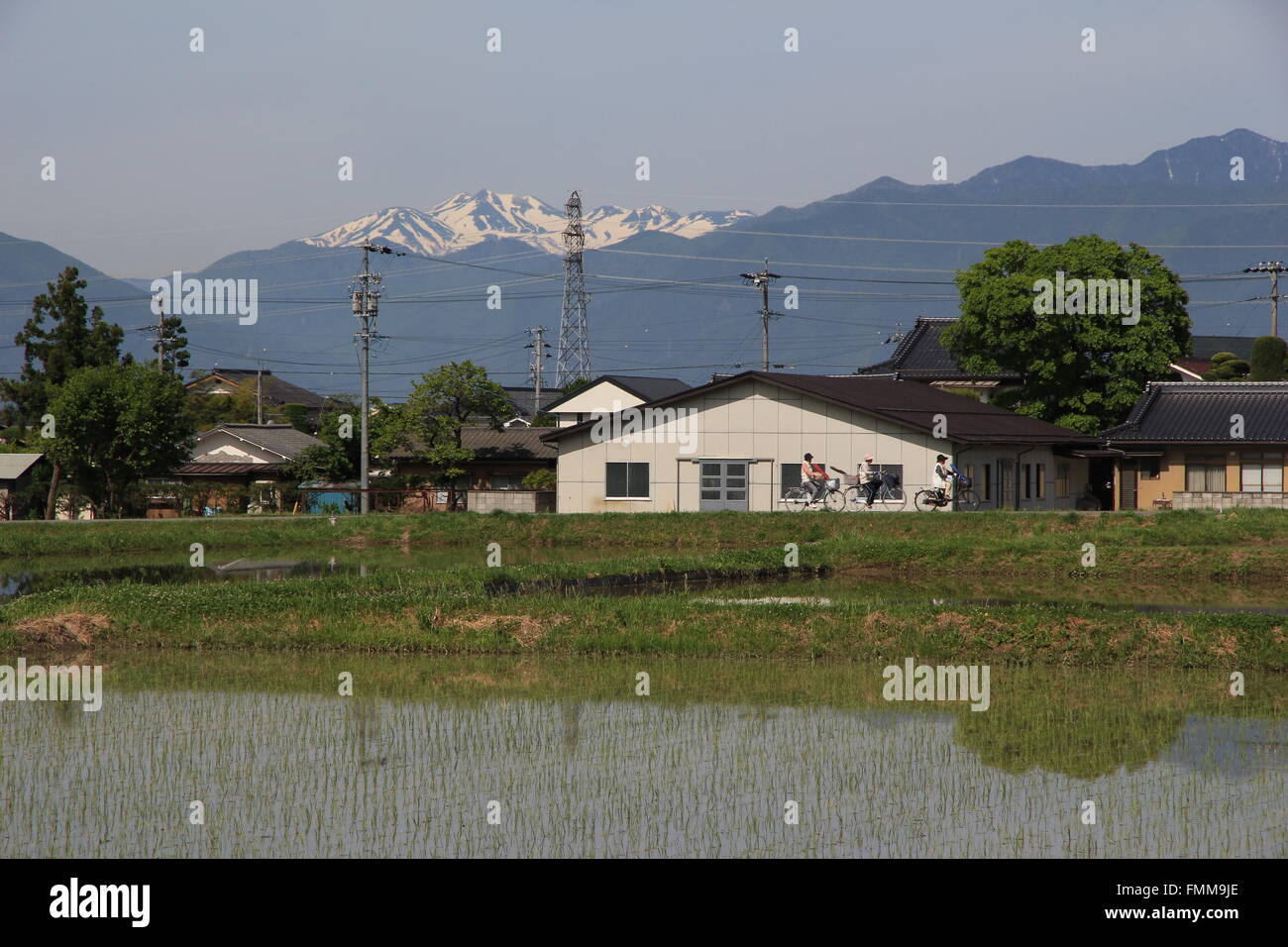 Everyday Scene of Japanese Ladies Cycling Past Paddy Fields - Stock Image