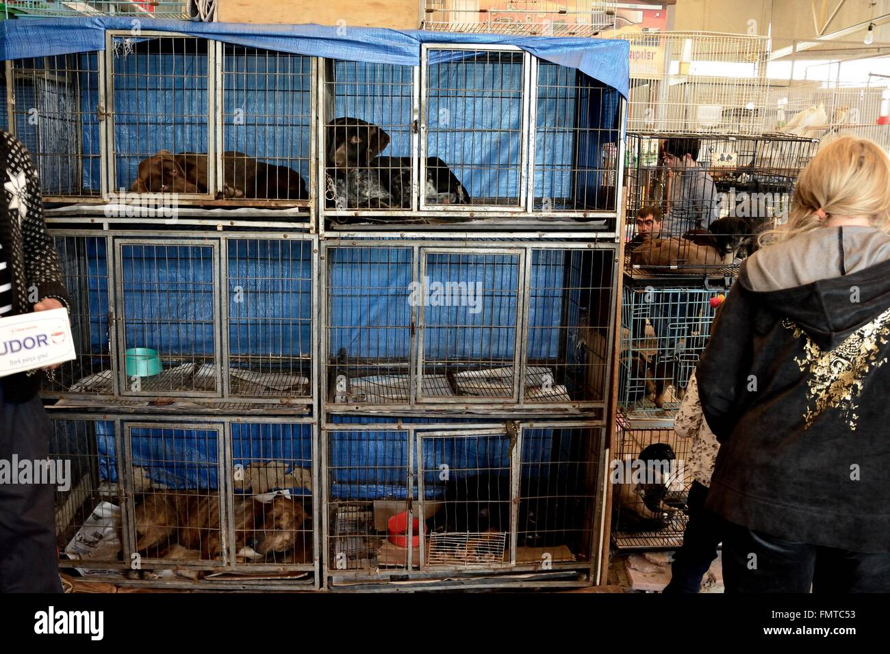 BAKU, AZERBAIJAN - MAY 8 2014 Dogs in cages for sale at a market in Azerbaijan. Animal welfare is not always a priority - Stock Image