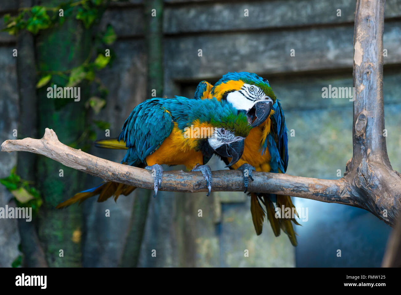 beautiful bright colors parrot on a branch close-up - Stock Image